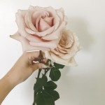 Happy Friday friends!! These quicksand roses has become one ofhellip